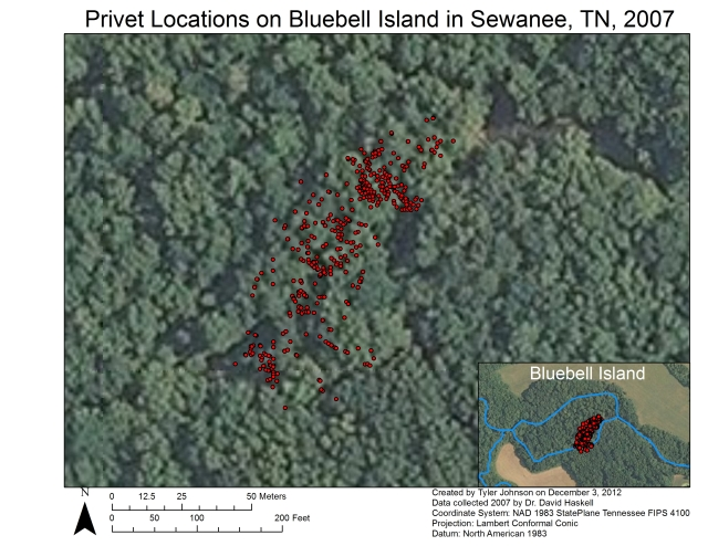 Tyler Johnson prepared this map of the location of every privet stem (2007 data) in Dr. Chris Van De Ven's GIS class. We'll be expanding the mapping analysis in coming months to include all three sapling periods, examining whether the spatial distribution of privet has shifted over time.