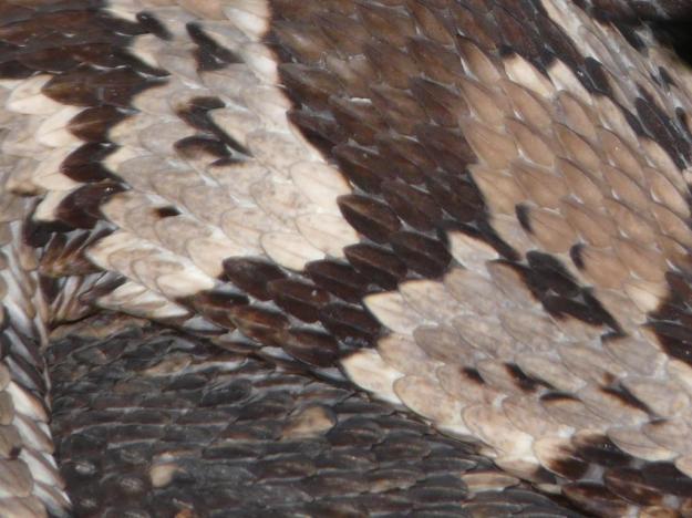 2013-06-20 rattlesnake ash 020
