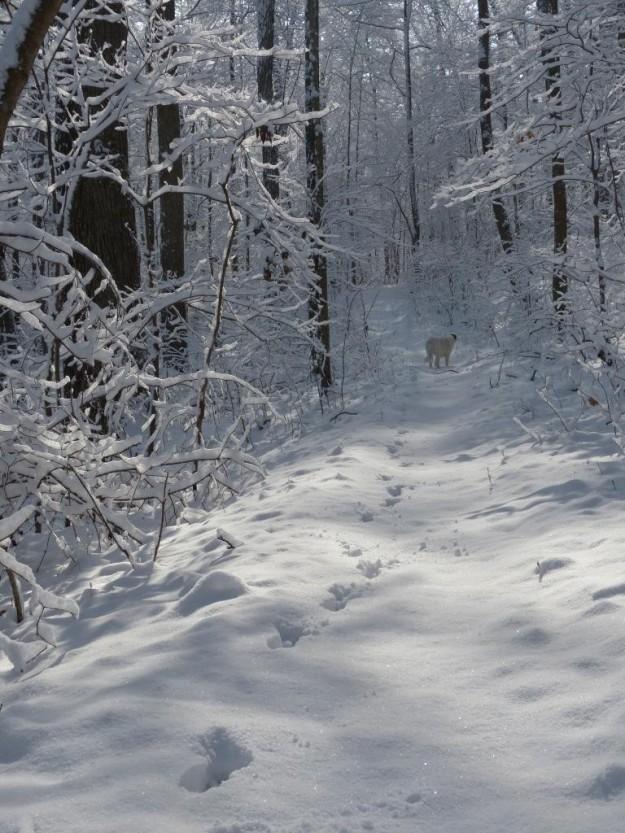 2014-02-13 ash shakerag snow 019