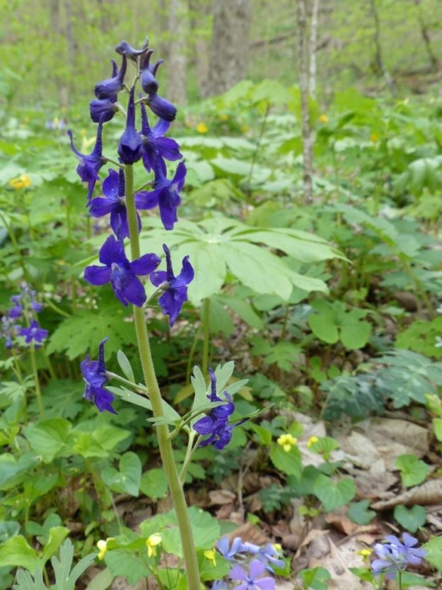 Larkspur. So violet it makes your eyes hurt.