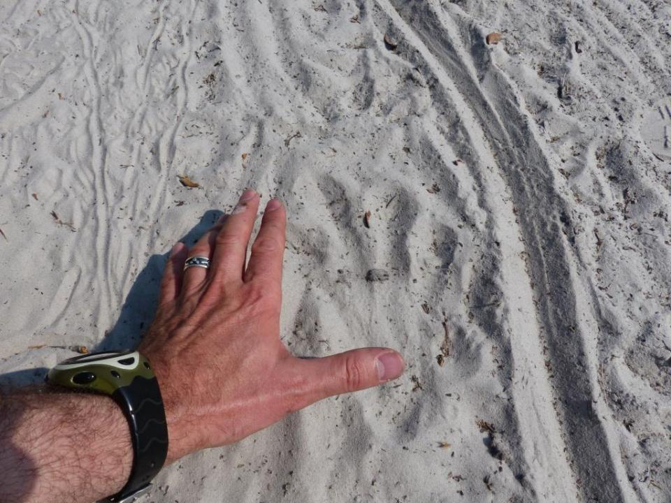 Big Moma Gator footprint and tail drag.