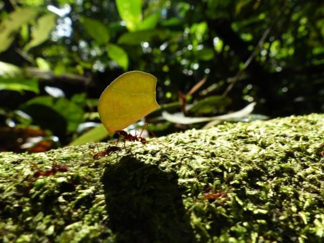 2014-09-03 Ecuador 120