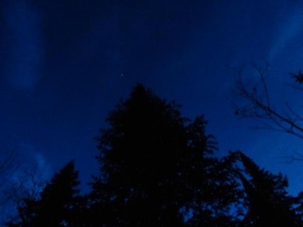 Fir at night