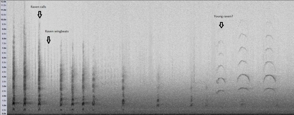 Spectrogram of the same sound. Time moves left to right, pitch increases along the vertical.