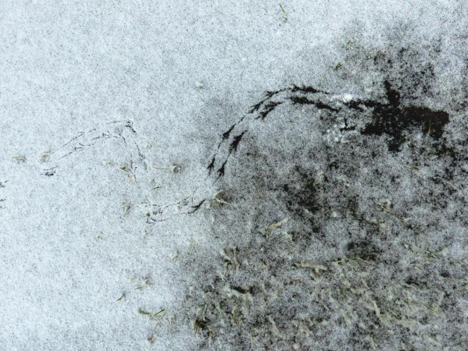 2015-02-17 snowprints 006