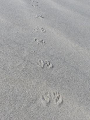 2015-06-16 sand tracks 002