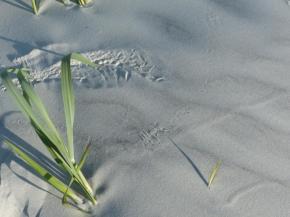2015-06-16 sand tracks 004