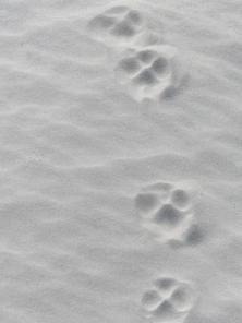2015-06-16 sand tracks 008