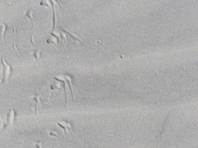 2015-06-16 sand tracks 014