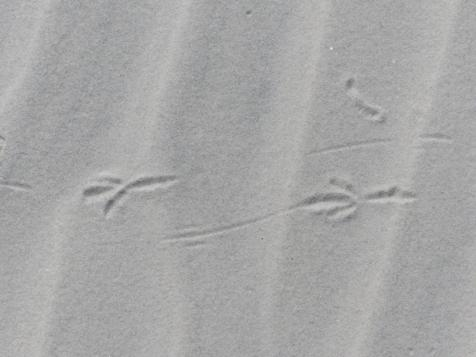2015-06-16 sand tracks 015