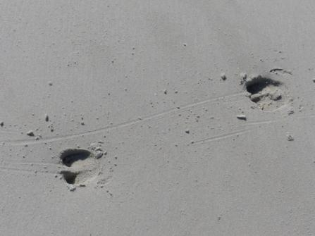 2015-06-16 sand tracks 020
