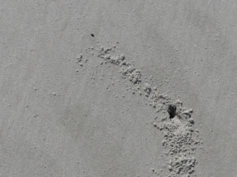 2015-06-16 sand tracks 023