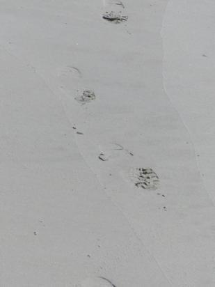 2015-06-16 sand tracks 024