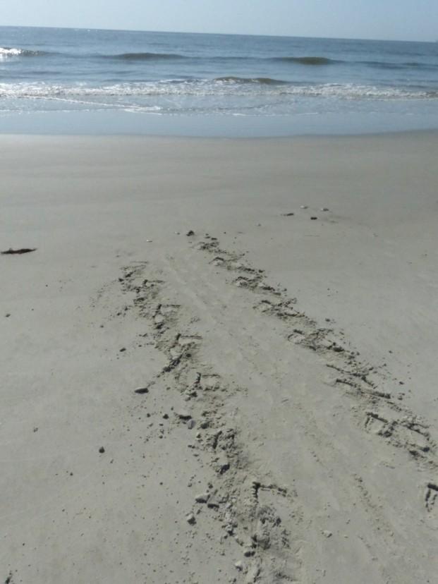 2015-06-16 sand tracks 026