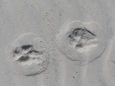 2015-06-16 sand tracks 030