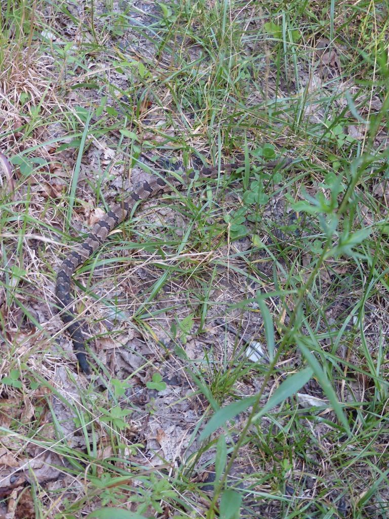 2015-07-07 rattlesnake 007