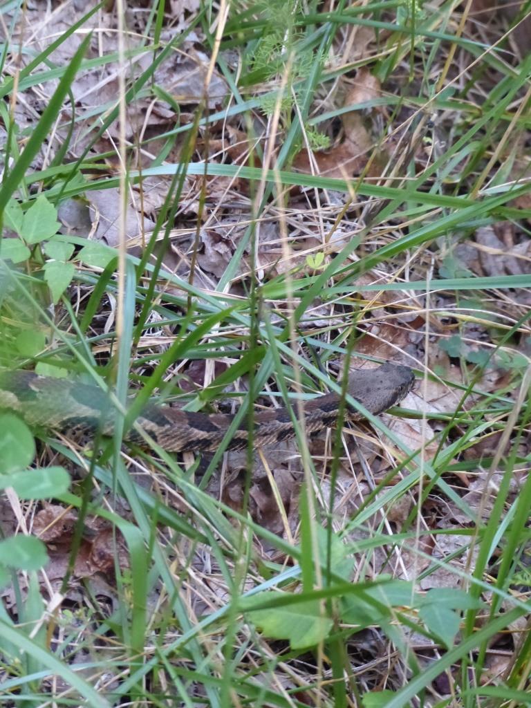 2015-07-07 rattlesnake 008