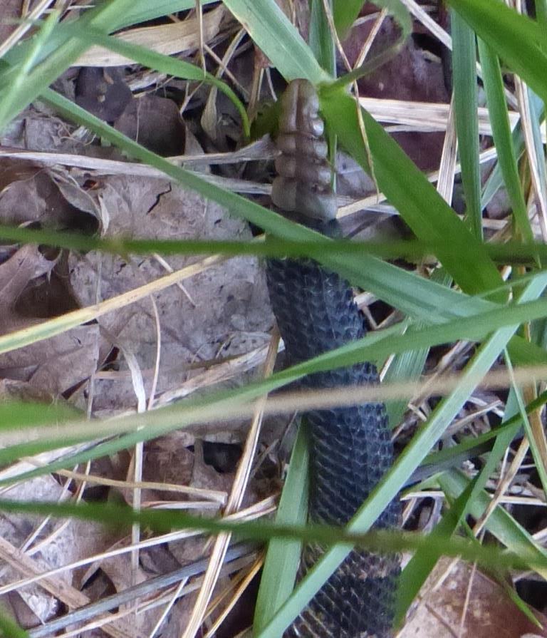 2015-07-07 rattlesnake 011