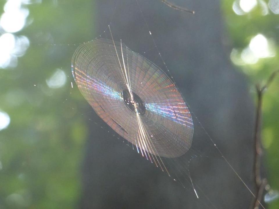 web_spider