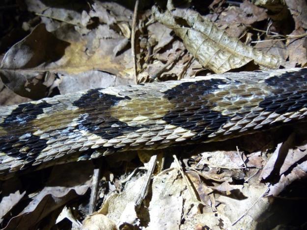 2015-08-05 Rattlesnake 012
