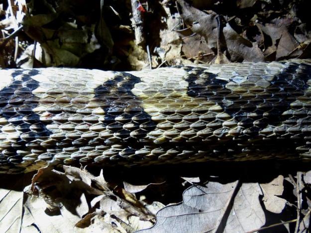 2015-08-05 Rattlesnake 017