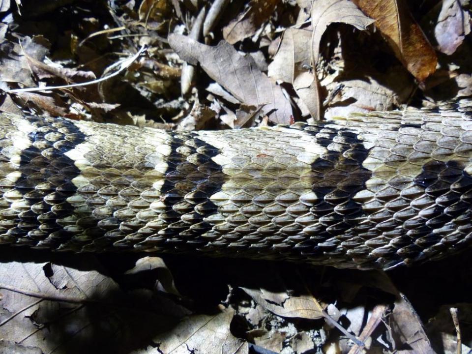 2015-08-05 Rattlesnake 021
