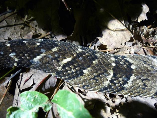 2015-08-05 Rattlesnake 024