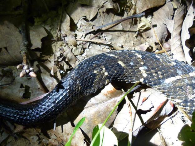 2015-08-05 Rattlesnake 026