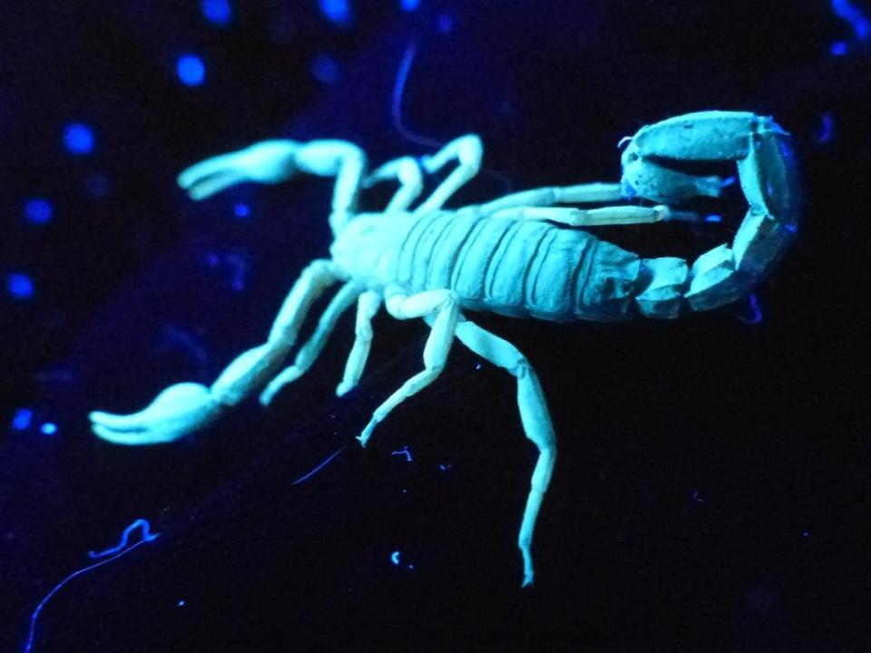 2015-09-04 scorpion 022