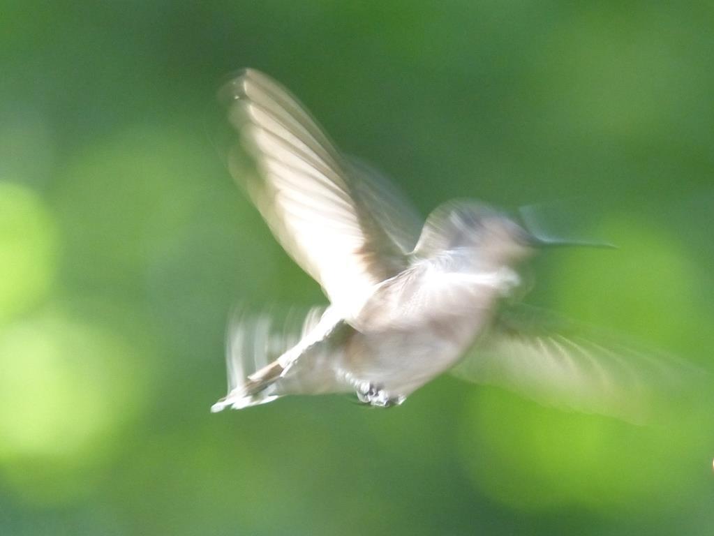 Estos pájaros pueden cantar con sólo sus plumas | Ciencia | Smithsonian