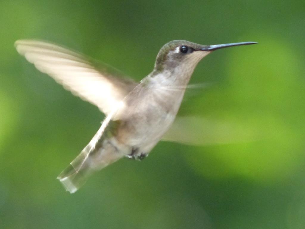 Luz, sonido, alas colibríes | Divagar