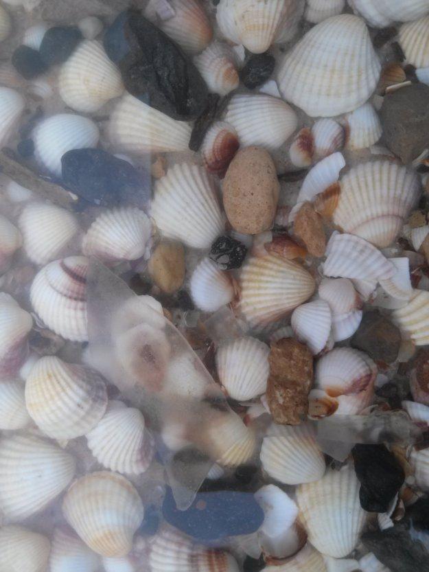 salinelake_shells