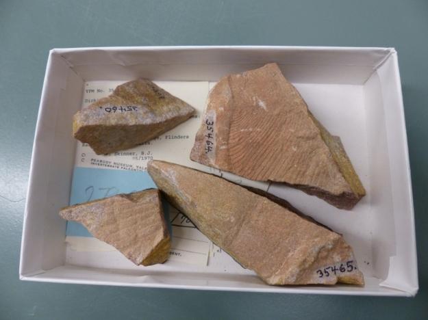 ediacaran-fossils-1