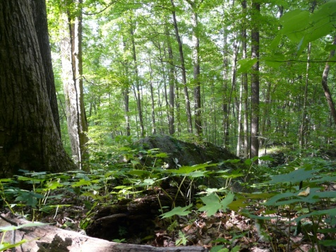 groundlevel-greenery