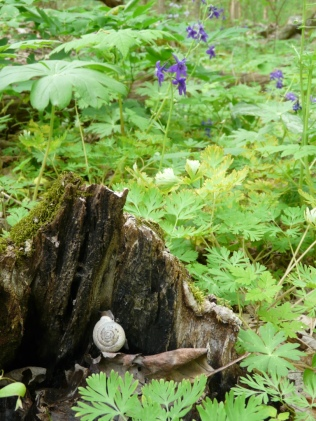 larkspur-and-snail