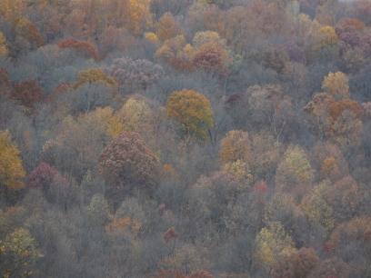 late-fall