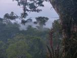 mist-copy