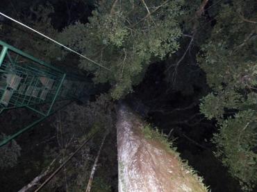 night-ascent-copy