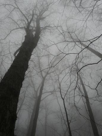 shakerag-march-27-2011-033i