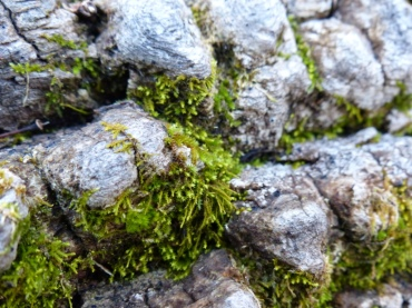 2013-12-16-ash-and-moss-detail