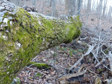 2013-12-16-ash-and-moss