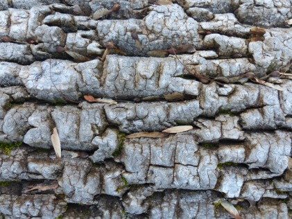 2013-12-16-ash-surface
