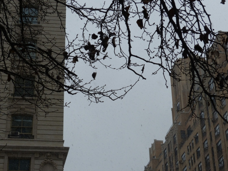 2013-12-17-callery-pear-after-leaf-fall