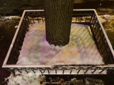2013-12-17-callery-pear-snow-reflections