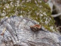 2014-02-08-ash-and-walnut