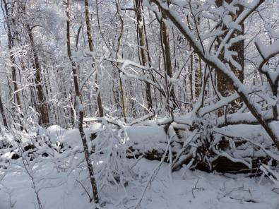2014-02-13-ash
