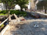 2014-05-13-cats-at-damscus-gate