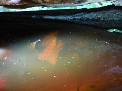 2014-06-09-pool-in-ash