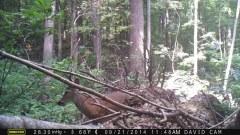 2014-09-14-buck