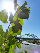 2014-10-05-015-cottonwood-at-confluence-park